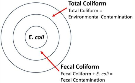 Total Coliform
